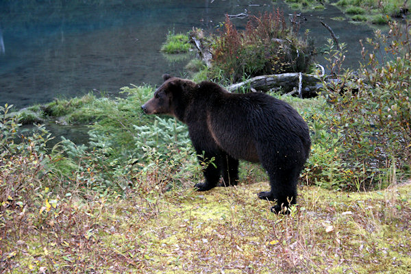 Bear Safety and Control